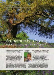 ARDNAMUCHAN IN SPRING copy